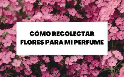 Recolección de flores para la creación de un perfume